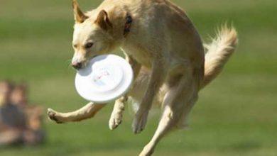 Photo of Frisbee nghĩa là gì?