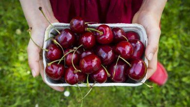 Photo of Cherry Úc nhập khẩu size 28-30-32 mua ở đâu? giá bao nhiêu?